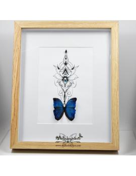 Papillon Lotus