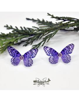 Papillon Mauvia